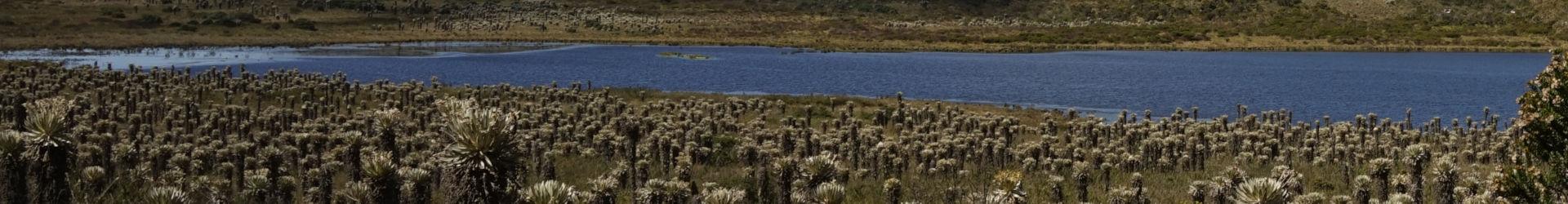 Paramo Monte de Leona, Boyacá